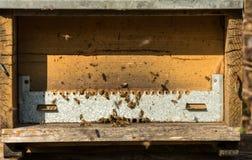 Casa de abeja en día soleado Fotos de archivo libres de regalías