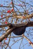 Casa de abeja de la colmena aka en el árbol Fotos de archivo libres de regalías