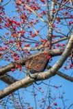 Casa de abeja de la colmena aka en el árbol Foto de archivo libre de regalías