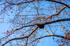 Casa de abeja de la colmena aka en el árbol Fotos de archivo