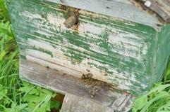 Casa de abelha Foto de Stock