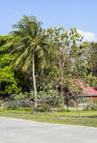 Casa de campo confortável entre palmeiras Fotografia de Stock