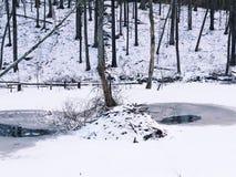 Casa de campo del castor en nieve Fotos de archivo