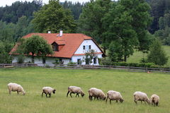 Casa de campo e carneiros Imagens de Stock Royalty Free