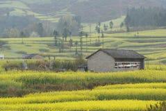 Casa de campo e exploração agrícola amarela da flor Foto de Stock Royalty Free
