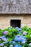 Casa de campo e hydrangeas Thatched imagem de stock