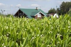 A casa de campo e os lírios do vale Imagem de Stock Royalty Free