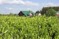 A casa de campo e pode do vale Fotografia de Stock