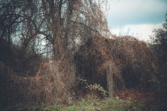 Casa de campo en bosque mágico Foto de archivo libre de regalías
