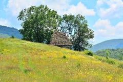 Casa de campo entre árvores com campo amarelo das flores. Imagem de Stock Royalty Free