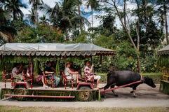 Casa de campo Escudero do passeio do carro do búfalo-da-índia, Tiaong, San Pablo, Filipinas Foto de Stock