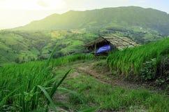 A casa de campo no arroz coloca a exploração agrícola Fotos de Stock