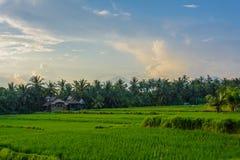 Casa de campo nos campos do arroz de Ubud, Bali, Indonésia foto de stock royalty free