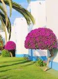 Casa de campo Portugal da buganvília Fotos de Stock