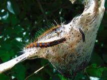 Casa de Caterpillar imagen de archivo