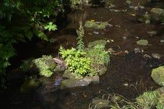 Casa de Cragside e jardins Northumberland fotografia de stock royalty free