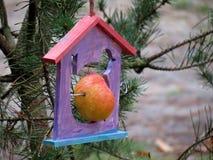 Casa de Fooder com maçã Foto de Stock