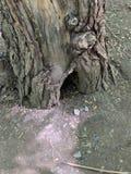 Casa de hadas ocultada en hueco del tronco foto de archivo libre de regalías
