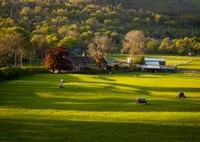 Casa de la granja que pasta ovejas Fotografía de archivo libre de regalías