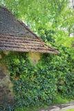 Casa de la hiedra Imagen de archivo