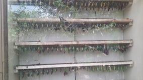 Casa de la mariposa Imagenes de archivo