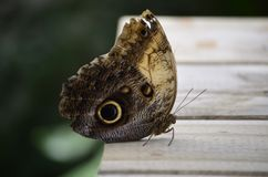 Casa de las mariposas dentro del parque Foto de archivo libre de regalías