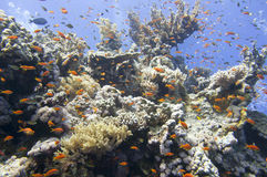 Casa de los corales del Mar Rojo para los pescados Fotos de archivo libres de regalías