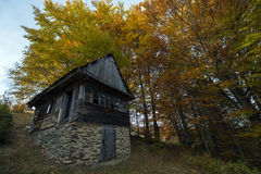 Casa de madeira abandonada na floresta Imagem de Stock Royalty Free