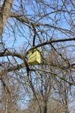 Casa de madeira amarela para pássaros em uma árvore imagens de stock