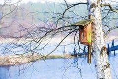 Casa de madeira do pássaro da caixa de assentamento na árvore exterior Inverno Imagens de Stock Royalty Free