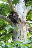 Casa de madeira do pássaro que espera os pássaros fotografia de stock royalty free