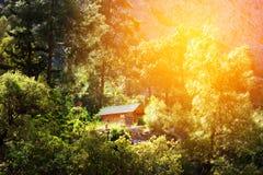 Casa de madeira em uma floresta, férias ativas Imagens de Stock