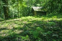Casa de madeira na floresta Fotos de Stock