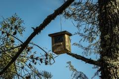 Casa de madeira para pássaros selvagens imagens de stock royalty free