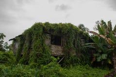 Casa de madeira pobre coberto de vegetação com as plantas verdes, cidade Bintulu, Bornéu, Sarawak, Malásia Fotos de Stock