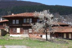 A casa de madeira velha com a árvore de florescência Fotografia de Stock
