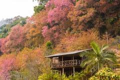 Casa de madera del flor de Sakura Imagen de archivo libre de regalías