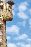 Casa de madera del pájaro del estornino, tronco de árbol grande de abedul, detallado Foto de archivo