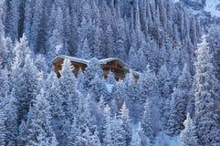 Casa de madera en bosque de la montaña del invierno Fotos de archivo libres de regalías