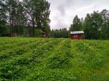Casa de madera de la fresa natural de Finlandia imagen de archivo libre de regalías