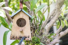 Casa de madera vieja del primer la pequeña para la caída del pájaro en el árbol en el jardín texturizó el fondo Imagen de archivo libre de regalías