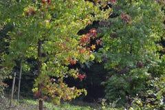 Casa de Newsam do templo do autumm das árvores Imagens de Stock Royalty Free