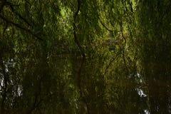 Casa de Newsam do templo da árvore de salgueiro Imagem de Stock