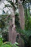 Casa de palma, jardines de Kew, Londres Fotografía de archivo