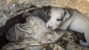 Casa de passeio do cão a comer fotografia de stock royalty free