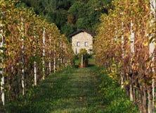 Casa de pedra na extremidade dos vinhedos Imagem de Stock