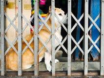 Casa de perro Fotos de archivo libres de regalías