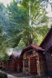 Casa de piedra tradicional del artesano y del árbol viejo hermoso Fotos de archivo