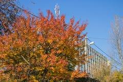 Casa de varios pisos del árbol del otoño de la cereza imagen de archivo libre de regalías
