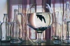 Casa de vidro Imagens de Stock